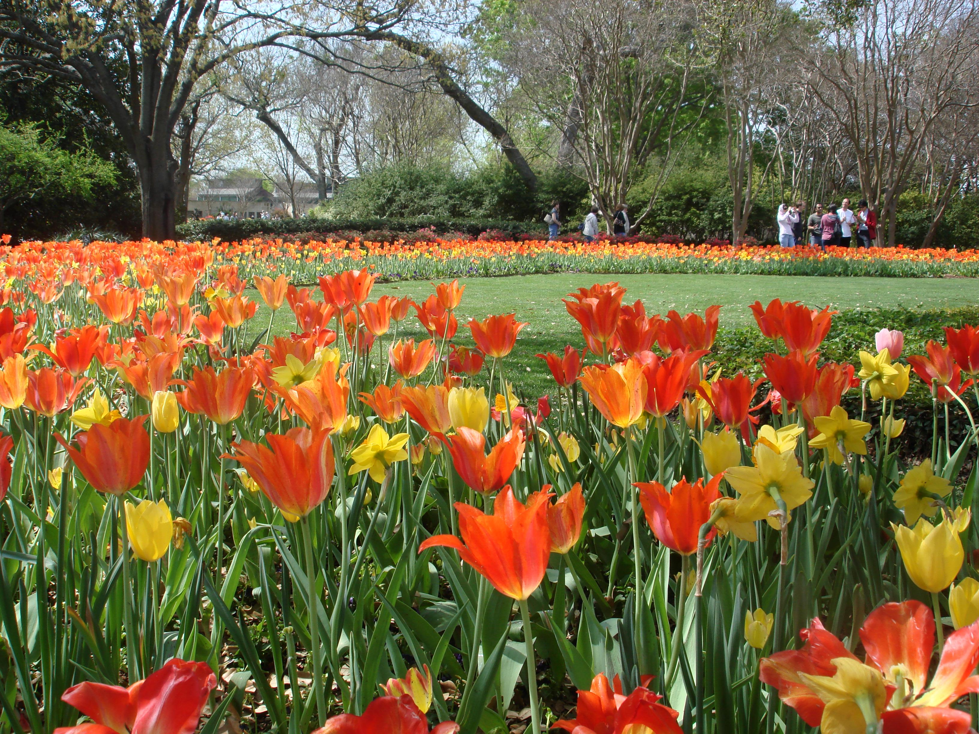 Arboretum fav tulips