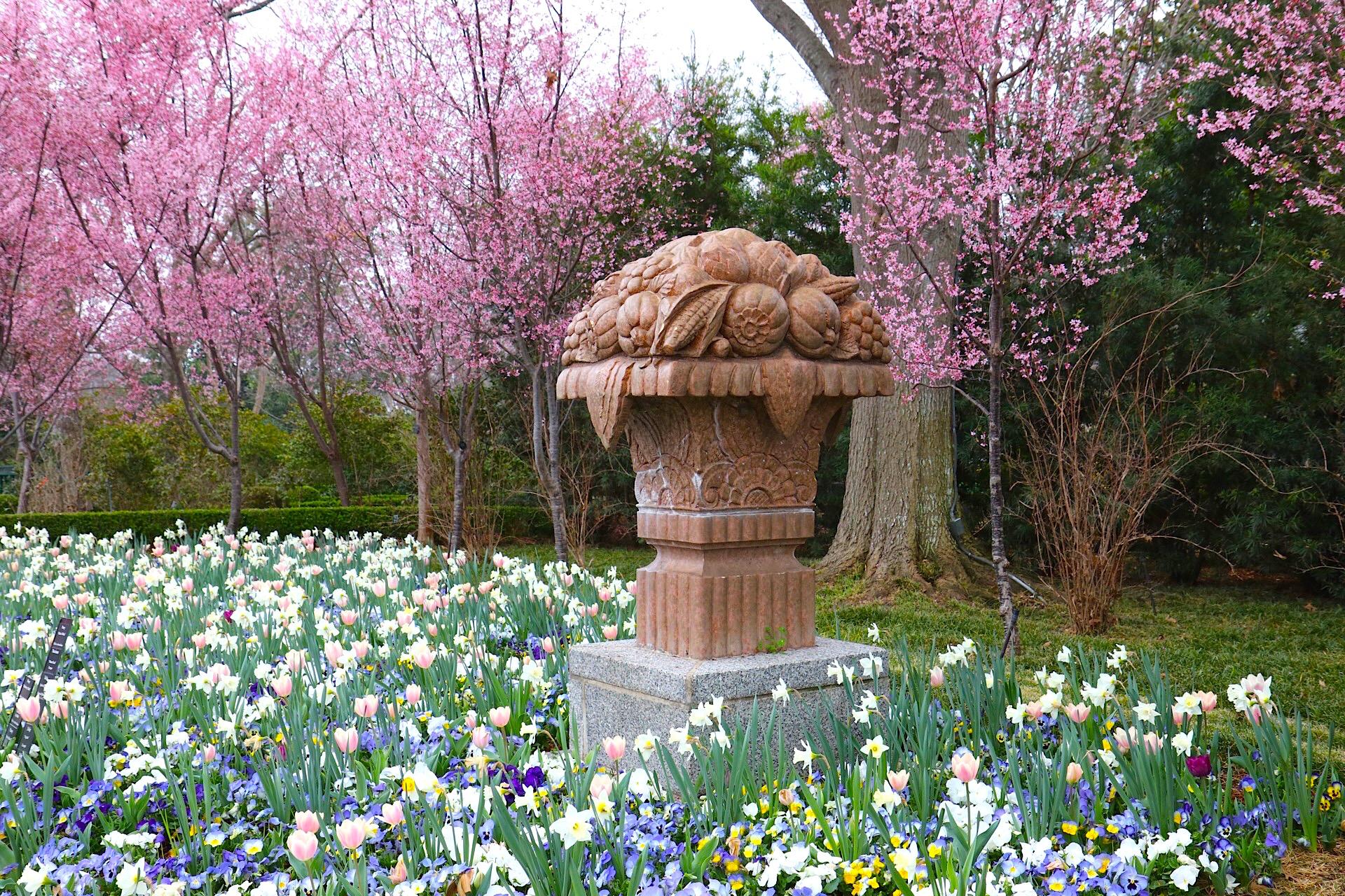 daffodils arboretum IMG_0250