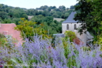france+lavender+fav+IMG_3187+sm