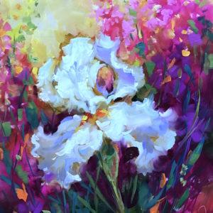 Morning Glow Iris Nancy Medina