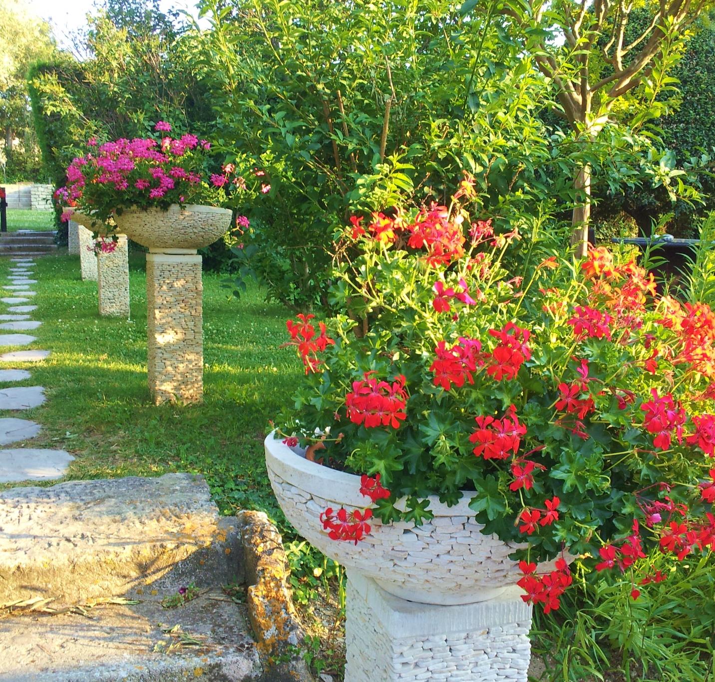mdc-geraniums