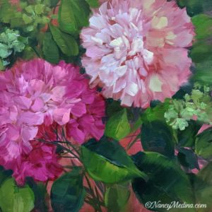 Petal Pink Hydrangeas