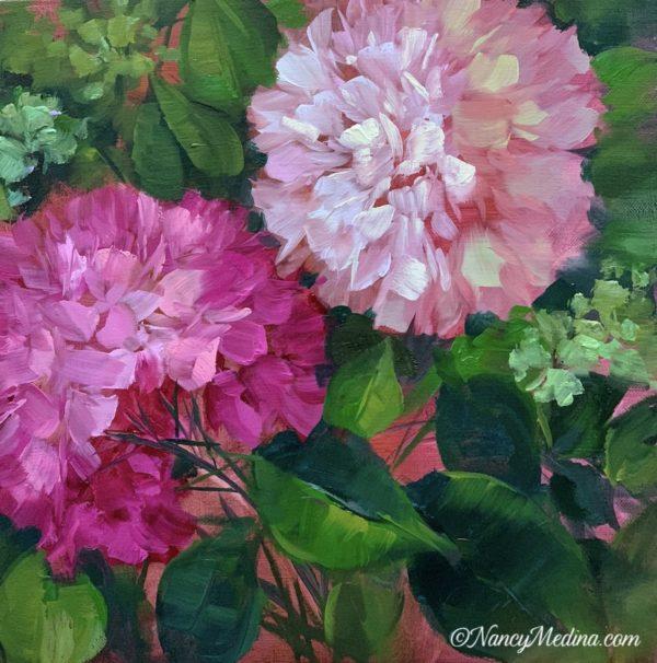 Petal Pink Hydrangeas