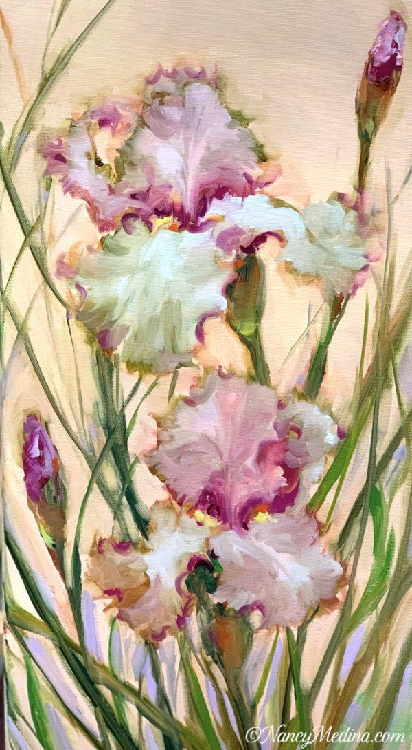 Peachy Pink Iris