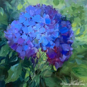 Blue Solo Hydrangea