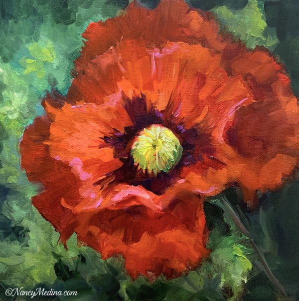 Summer Shade Red Poppy