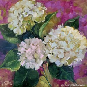 Three French Ladies Hydrangeas