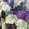 Purple Sparkler Hydrangeas studio peek