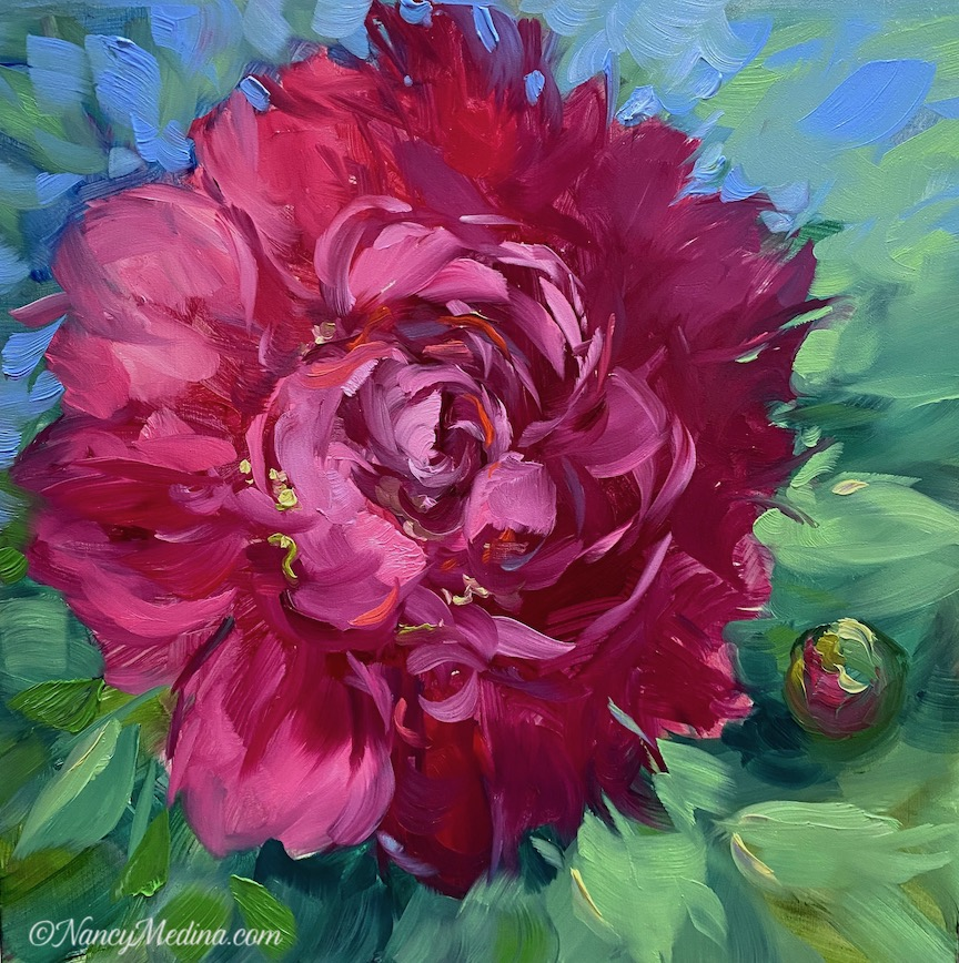 French Pink Peony