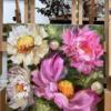 Pink Radiance Peonies studio peek 20X20